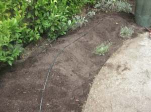 The top layer is covered with soil and watered in
